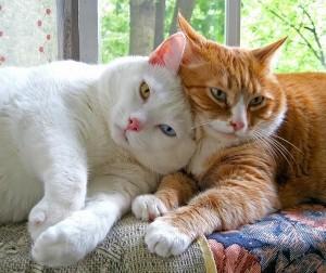 Дружба кошек - возможно ли такое ?
