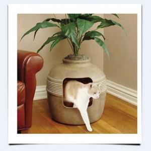 Выбор места для кошачьего туалета
