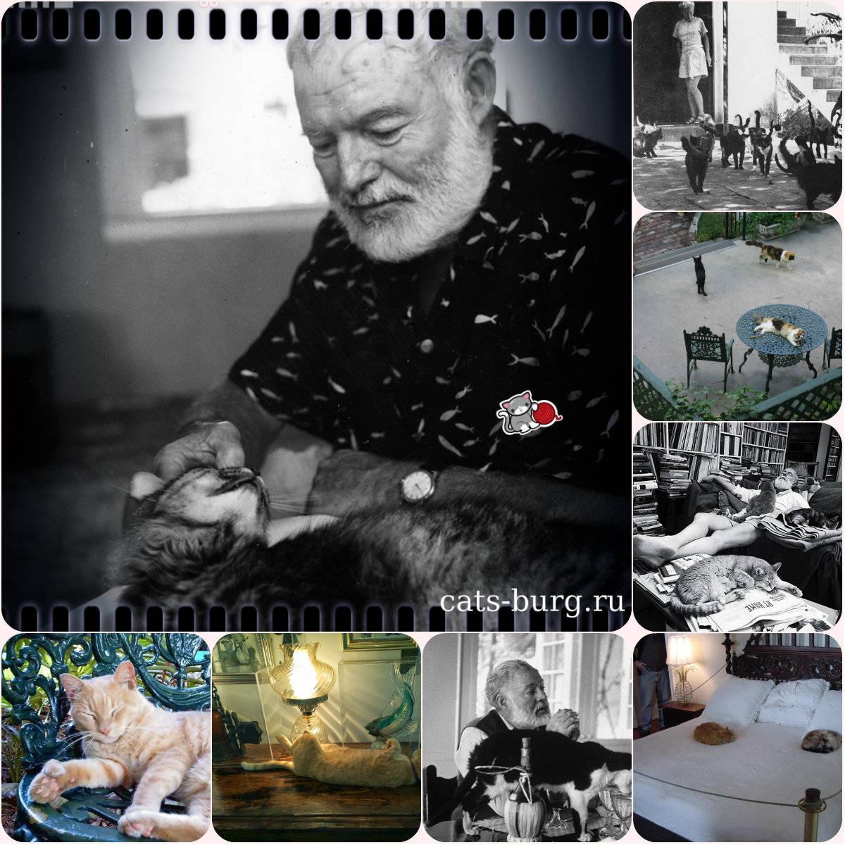 Хемингуэй и его шестипалые кошки