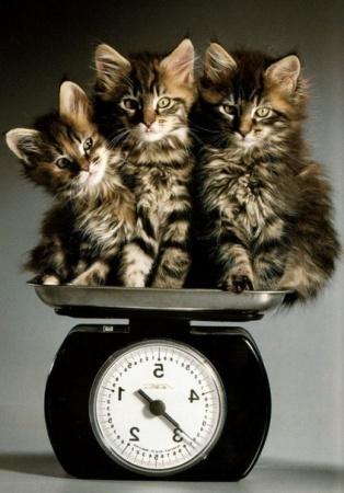 http://cats-burg.ru/wp-content/uploads/2012/11/%D0%9A%D0%BE%D1%82-%D0%B8-%D0%B2%D0%B5%D1%81%D1%8B.jpg