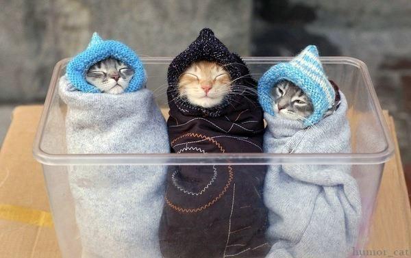 содержание кошки зимой
