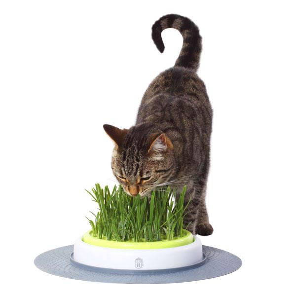 Кошки едят траву и как посеять траву