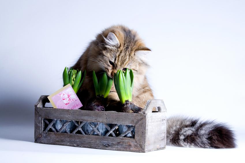 кошка ест цветы
