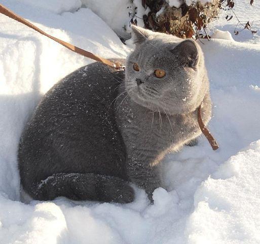 питание кастрированных котов