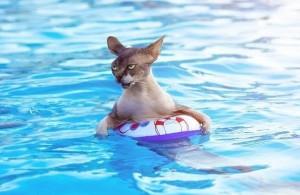 кошка боится воды