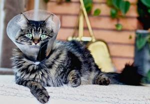 Чипирование кошек это дань моде или необходимость ?