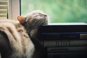 кот и книги1