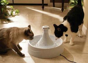 поилка для кошек