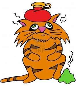 помощь кошке при тепловом ударе