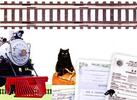 как перевозить кошку в поезде