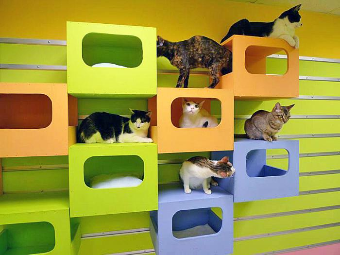 Игровая коробка для кота