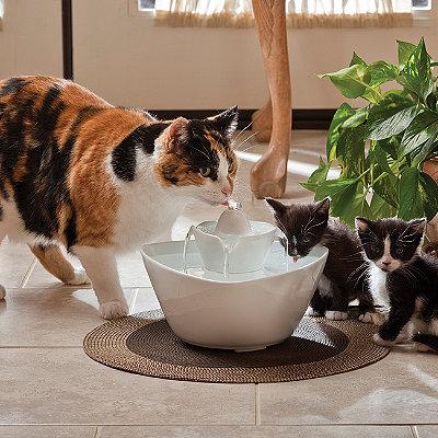 автоматическая поилка-фонтан для кошек
