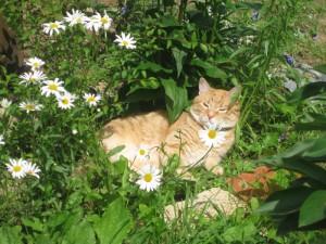 опасность для кошки на даче