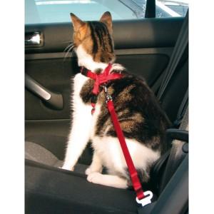 как перевозить кошку в машине