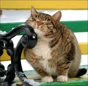 Кошка трется об угол