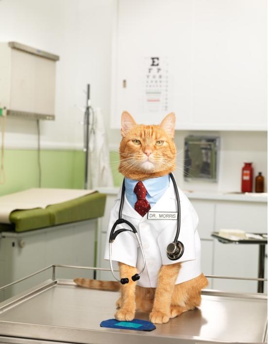 Фелинотерапия.Как кошки лечат,кошкотерапия