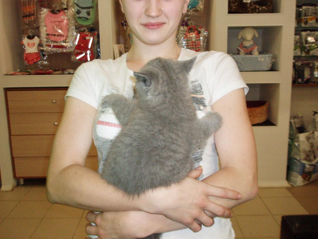 фелинотерапия,кошки лечат болезни