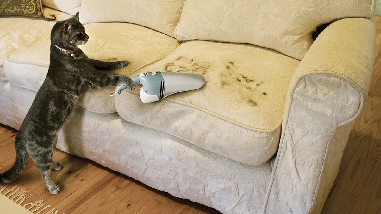 как избавиться от кошачьей шерсти в квартире