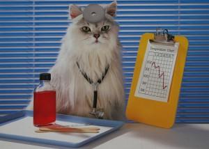 как кошки лечат человека