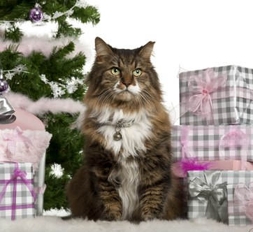 Подарок кошке на Новый год Лошади - подкова из пророщенного овса