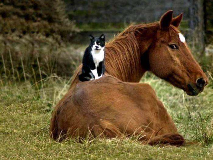 кошек собак и лошадей