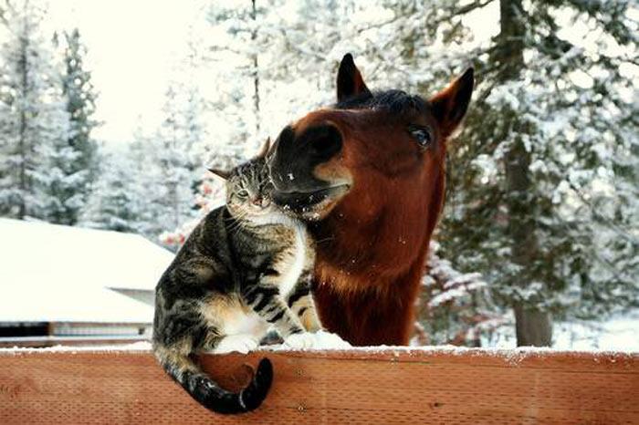 фото кошки и лошади