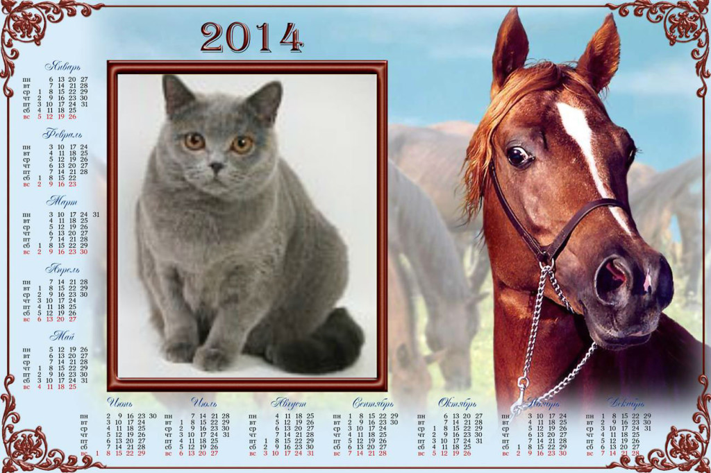 кошки и лошади