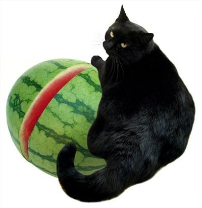 кот ест арбуз