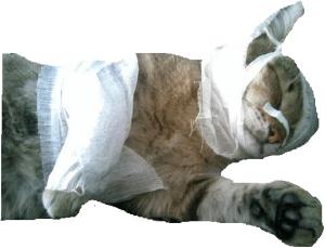 рана у кошки
