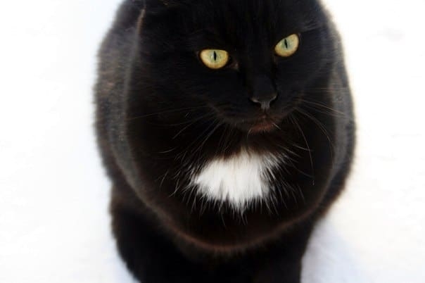 черные кошки и Хэллоуин