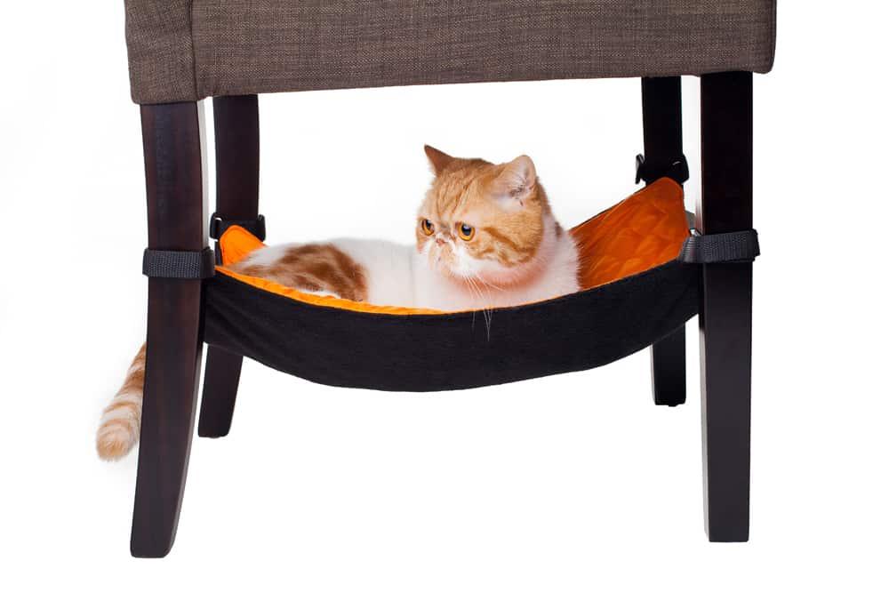 гамак для кошки на стул
