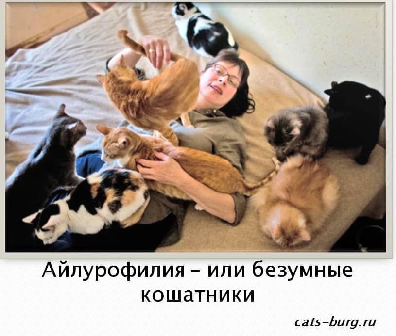 айлурофилия - или безумные кошатники