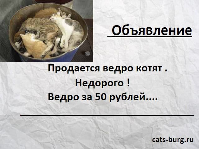 бездомные кошки и котята
