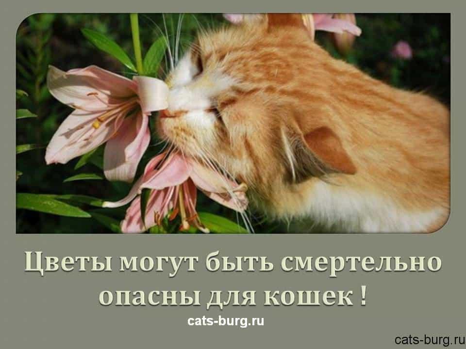 цветы смертельно опасны для кошек