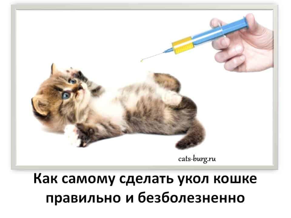 укол кошке в холку и внутемышечно