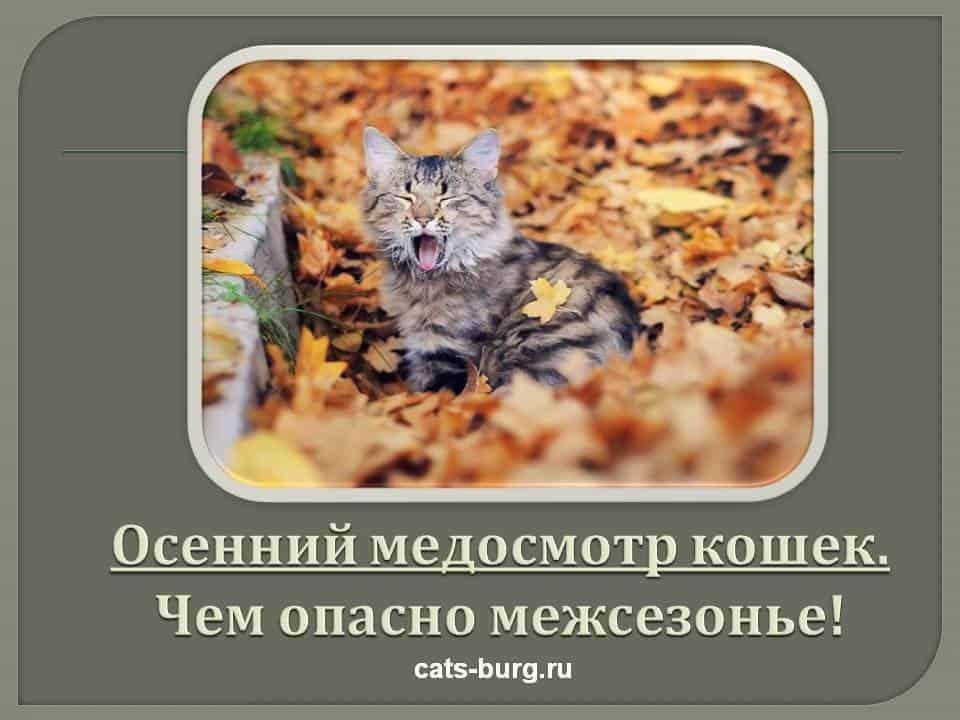 осенняя профилактика кошек
