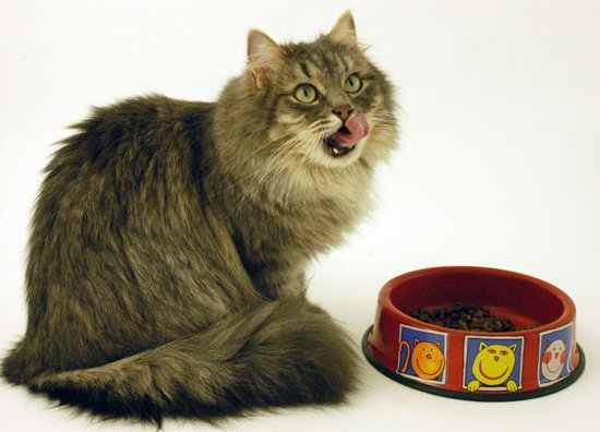 Кормление и питание домашних кошек