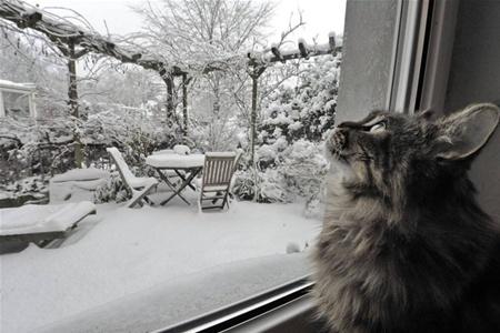 Почему кошки линяют зимой и что с этим делать ?