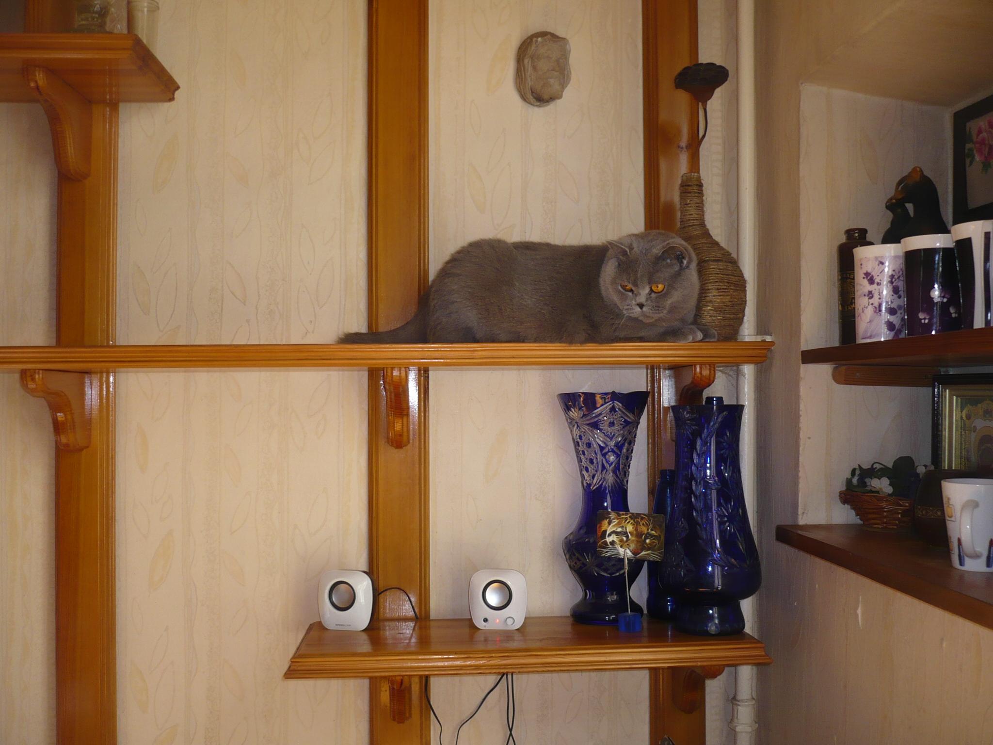дом мечты для кошки