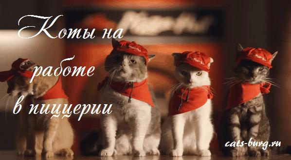 кафе с кошками