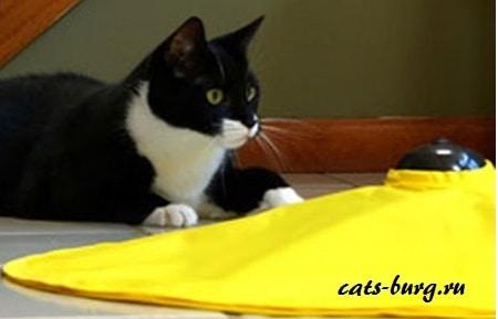 игрушка для кошек интерактивная