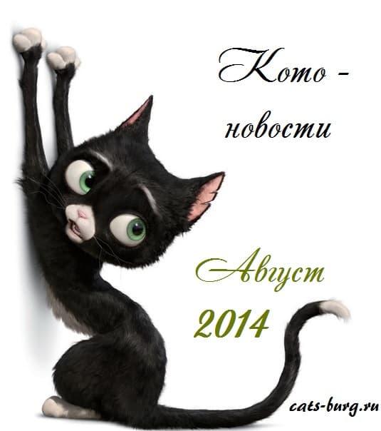 про кошек новое видео 2014