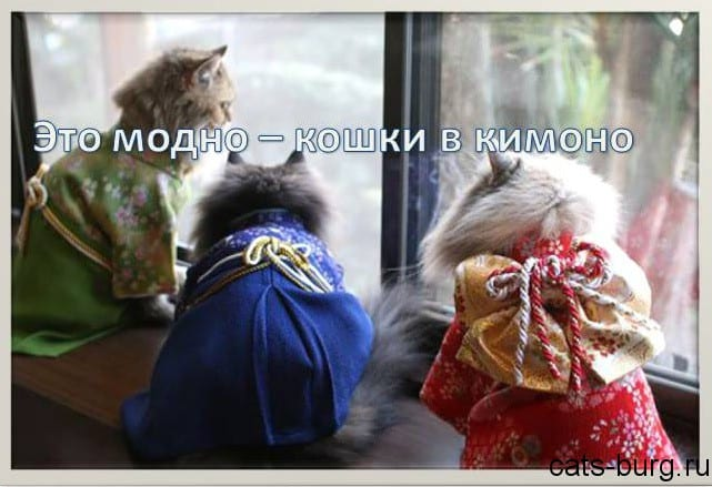 кимоно для кошек