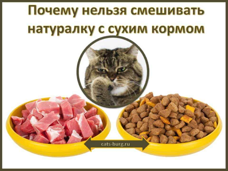 почему нельзя смешивать натарулку с ухим кормом для кошек