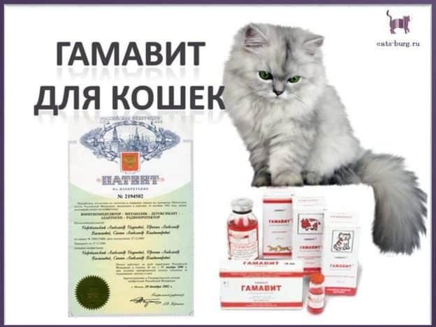 гамавит и форте для кошек